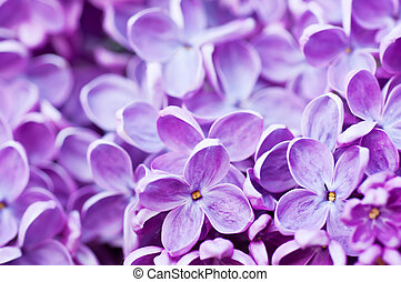 Lilac flowers background - Macro image of spring lilac...