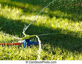 Irrigation of green grass
