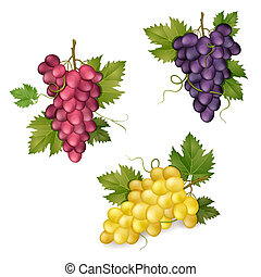 Different varieties of grapes on white background