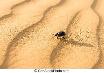 Scarab on sand dune in desert - Running scarab on sand dunes...