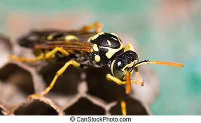 黃蜂, 巢