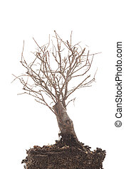 dry tree - a dry tree on white background