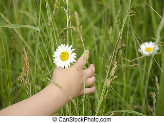 Beautiful little girl gathers a bouquet of daisies