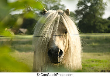 White pony for electric fence