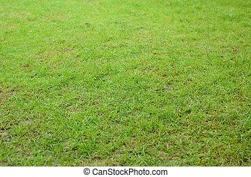 Gree grass background texture