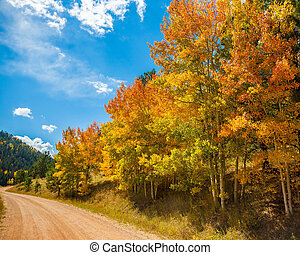 Fall Leaves by Roadside