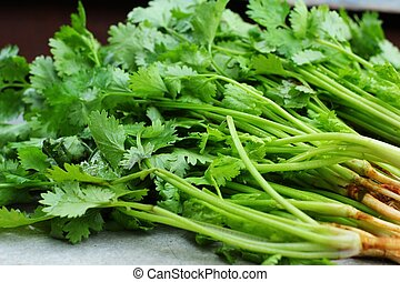 Coriander on the gray background
