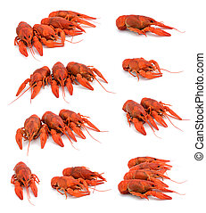 Boiled crawfish set on white background