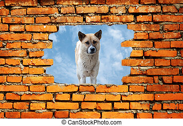 porous wall to see the dog