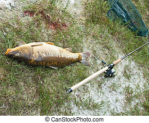 big carp fished at the lake - 5 Kilo carp fished with the...