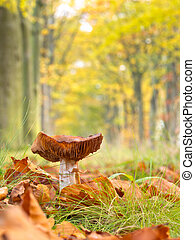 Mushroom growing in a Forest Lane with Shallow Depth of Field