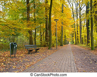 Stone track with seat through a forest with autumnal foliage