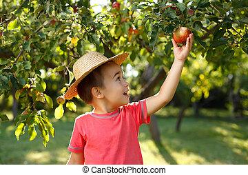 Little happy boy touching apple - Little happy boy in straw...