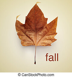 fall - picture of a dried leaf and the word fall with a...