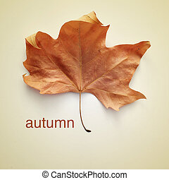 autumn - picture of a dried leaf and the word autumn with a...
