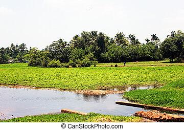 Swamp In Kerala