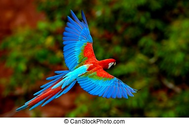 parrot bird fly in the sky