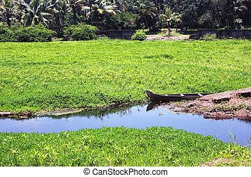 Swamp In Kerala - Swamp in Kerala