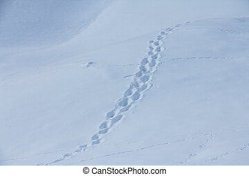 Animal traces on snow - Fresh animal traces on snow in...