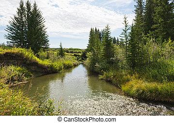 Creek - A creek through a forest near Maple Creek,...