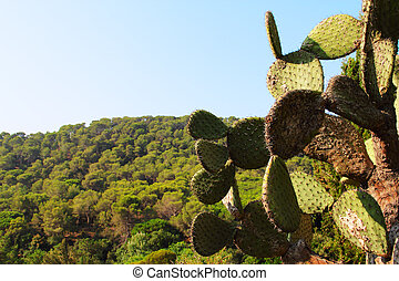 Landscape with cactus