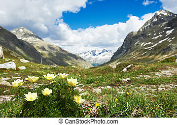 Alpine mountains with flowers