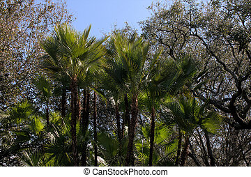 Tropical Tree Line - Nice tropical background in a line of...