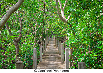 Wood walkway - Old wood walkway through in mangrove forest
