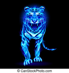 Blue fire tiger - Blue fire tiger isolated on black...