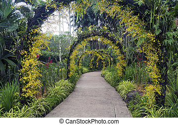 Botanical garden in Singapore - scenic pathway under natural...