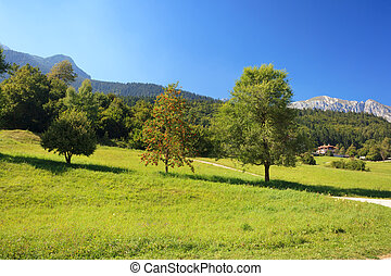 Alpine landscape with green meadow and trees in Andalo,...
