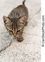 Cat puppy  - a little cat is left over prudent