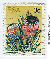 Postage stamp. - RSA - CIRCA 1977: A stamp printed in RSA...