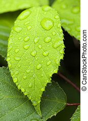 Leaf with rain drops in a macro shot