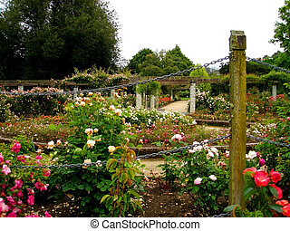 Rose Garden - Dunedin Botanic Garden, New Zealand