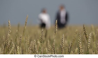 Wheat field colleagues - Colleagues taking a walk in the...