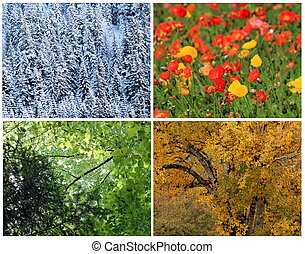 Four seasons collage : spring, summer, autumn, winter