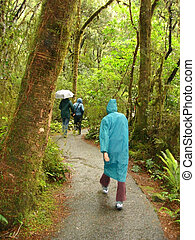 Wet Walk through Rainforest - Three people in wet weather...