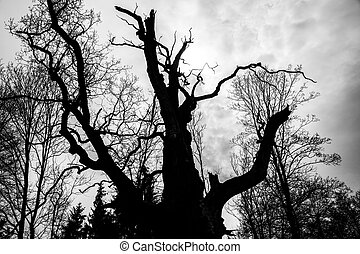 black and white  silhouette of tree detail-view.