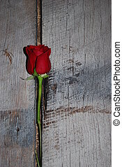 Rose on barnwood - A single stemmed, red rose on aging grey...