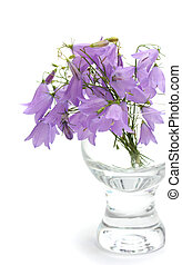 Bellflower in a vase it is isolated on a white background