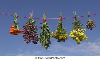 summer medical herb bunches on string and sky background...
