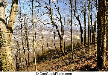 Woods over a city - Woods overlooking Chattanooga Tennessee...