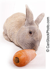 Rabbit - A rabbit eating a carrot isolated on a white...