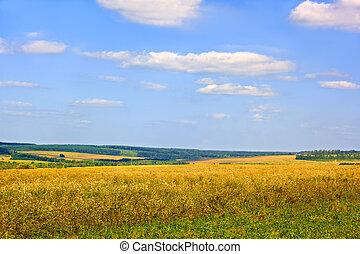 Rural late summer landscape