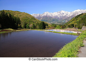 Japan Alps and terrace paddy field, Hakuba village Aoni,...