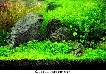Aquarium with fish