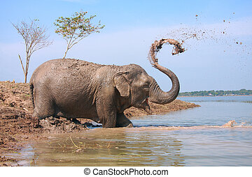 Elephant play water
