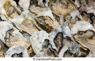Closeup fresh oysters on buffet line