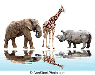 giraffe,elephant and rhino isolated on white
